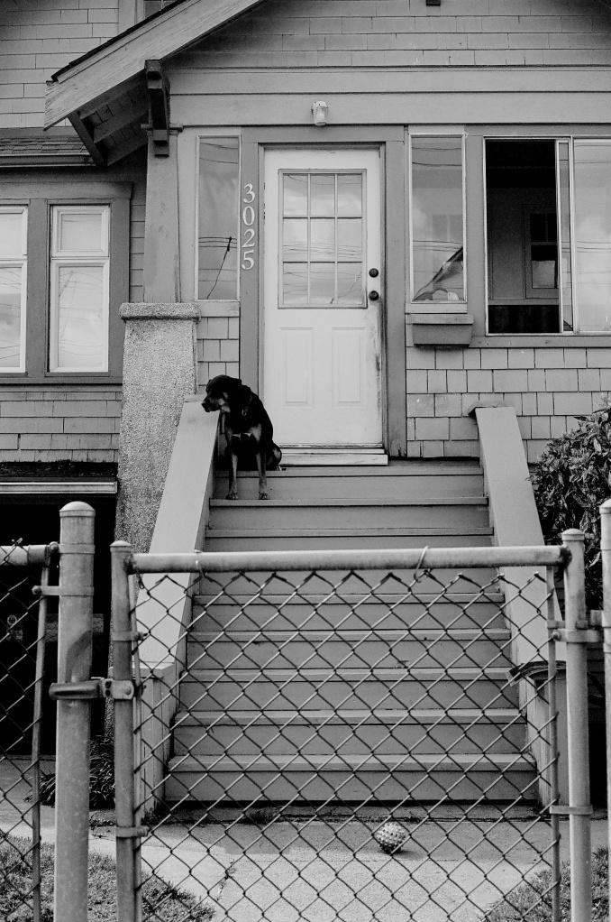 Porch Dog.